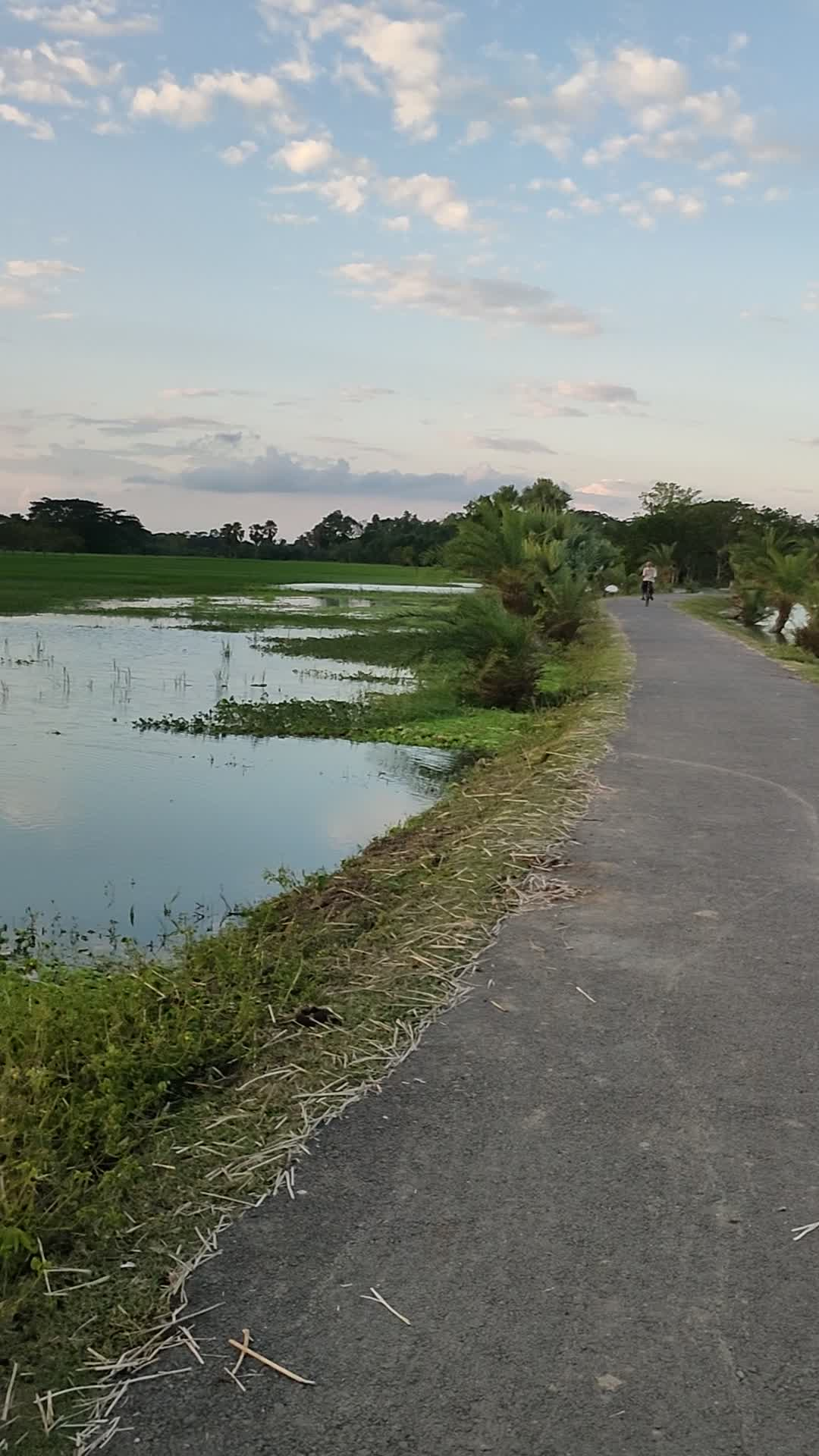 Beautiful road,  Field filled with water, natural beauty, Bangladesh, Dhulihor