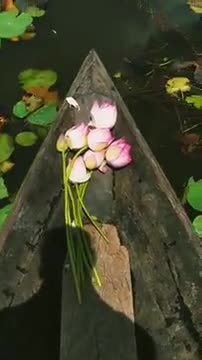 Lotus flower video on the boat.