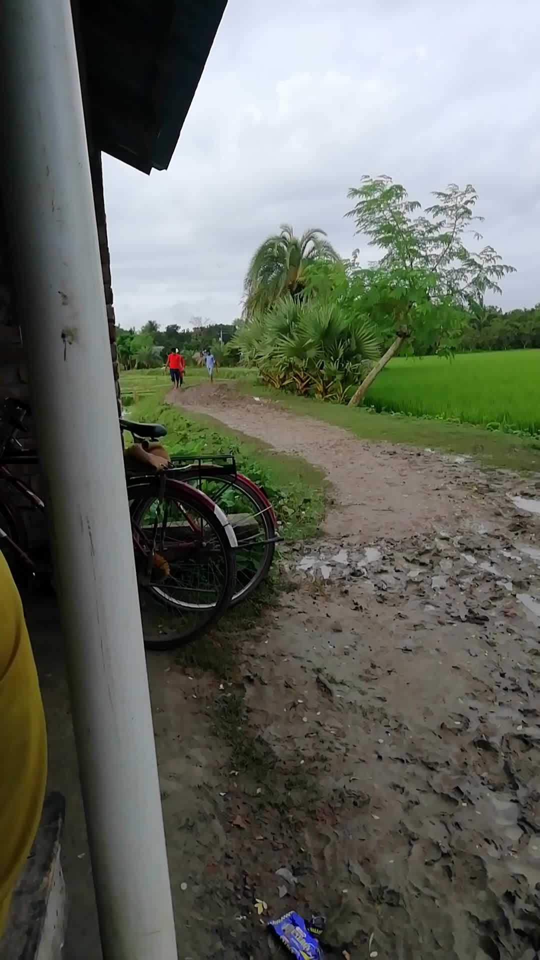 This road looks more beautiful in Satkhira district Jiala village