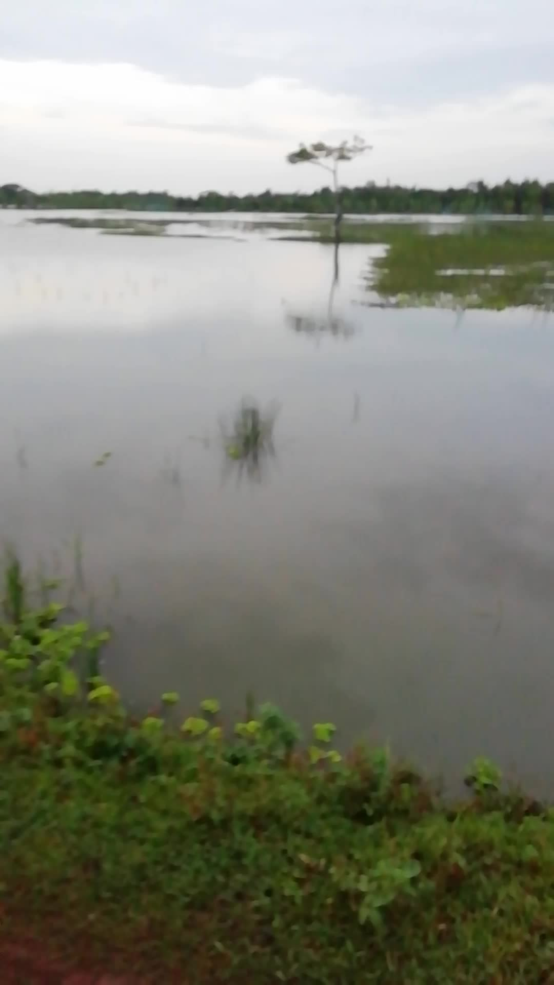 A video footage of the floods in this field in the district village of Satkhira district has caused all the crops to be destroyed