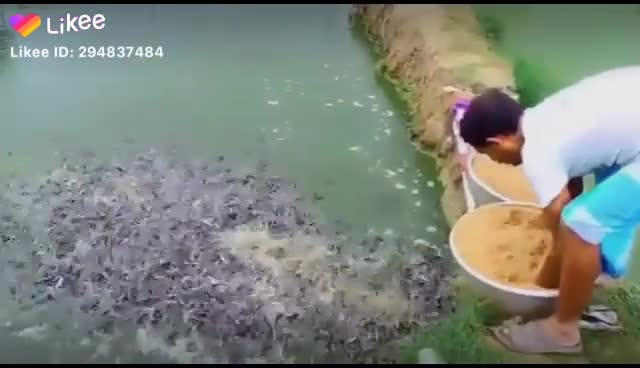 A man is feeding the fish in the pond.