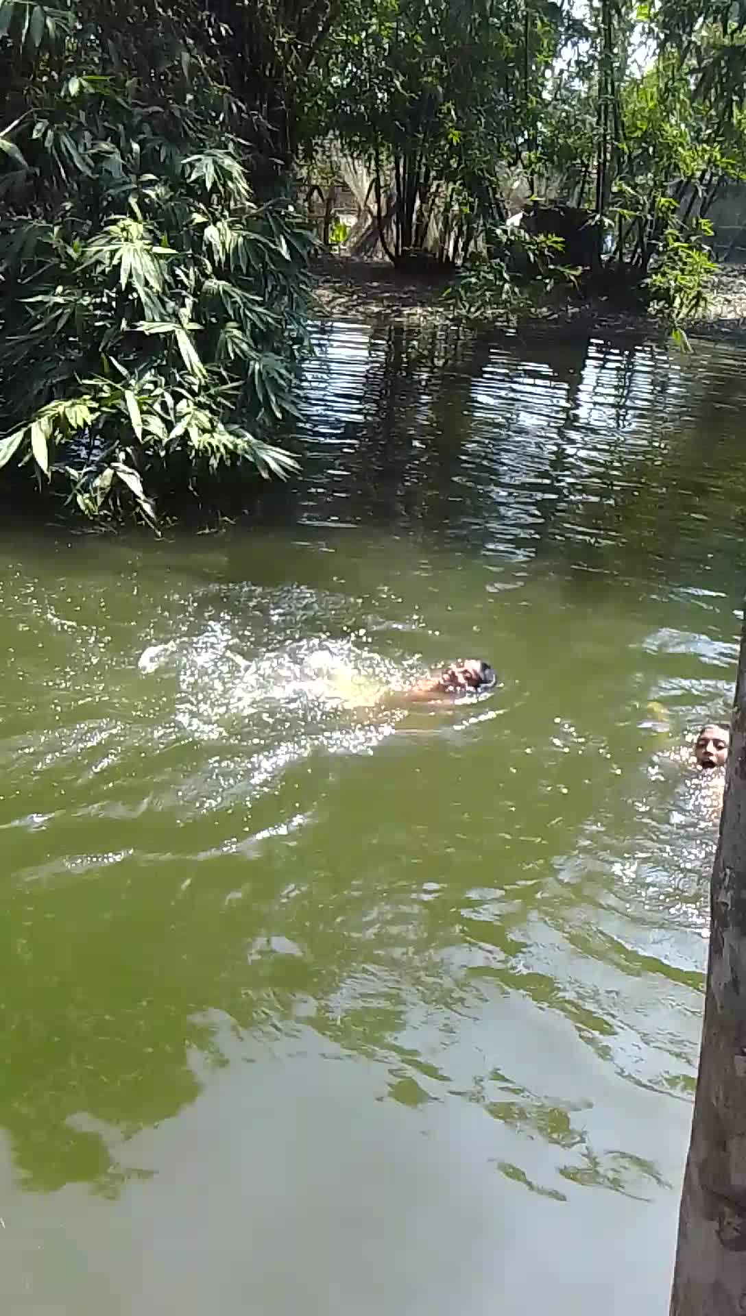 A little boy swimming in a pond.