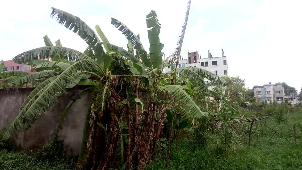The video you are watching is a very beautiful moment. The video was taken during the rainy season. I made this video from the side of my house. The video was taken with the camera of my phone.  I just made this video at that time. I was doing this video with great pleasure. I feel good to watch this video. It makes me feel good and it is a very good time video. You and you can watch this video.  It didn't hurt, but I'm trying my best to make the video better. Please let me know what the video looks like by commenting, and especially if you want to get a video of such a moment while sitting.  If you want to follow me then you can follow me and I like these videos very much.
