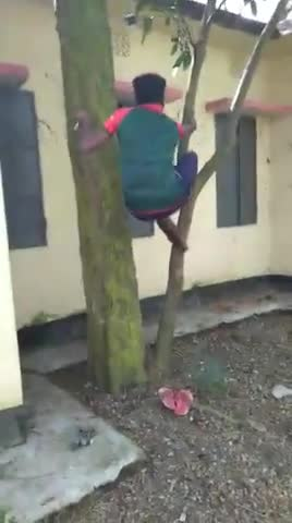 This beautiful video was made while climbing the Amalki tree.