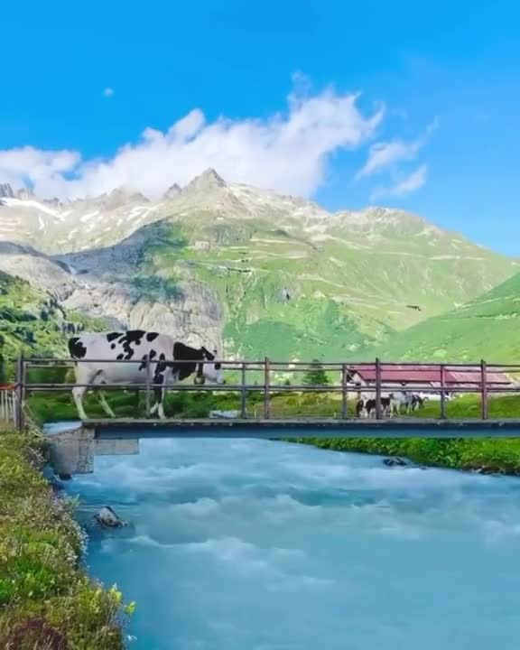 These mountains of Switzerland are full of natural beauty.