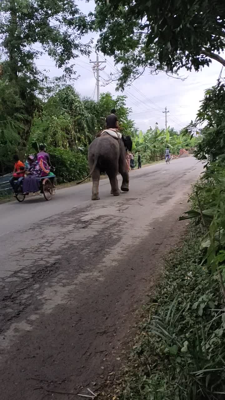 This video is about elephants walking down the road.
