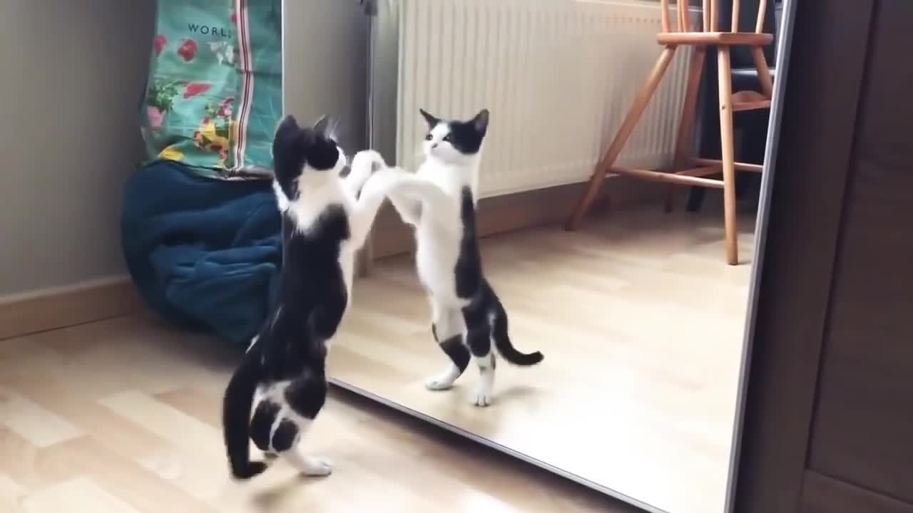 This is a funny video of a cat, it looks great🙄🙄