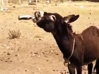 You can't understand what kind of funny scene a donkey can do without seeing it😀😀😀😀