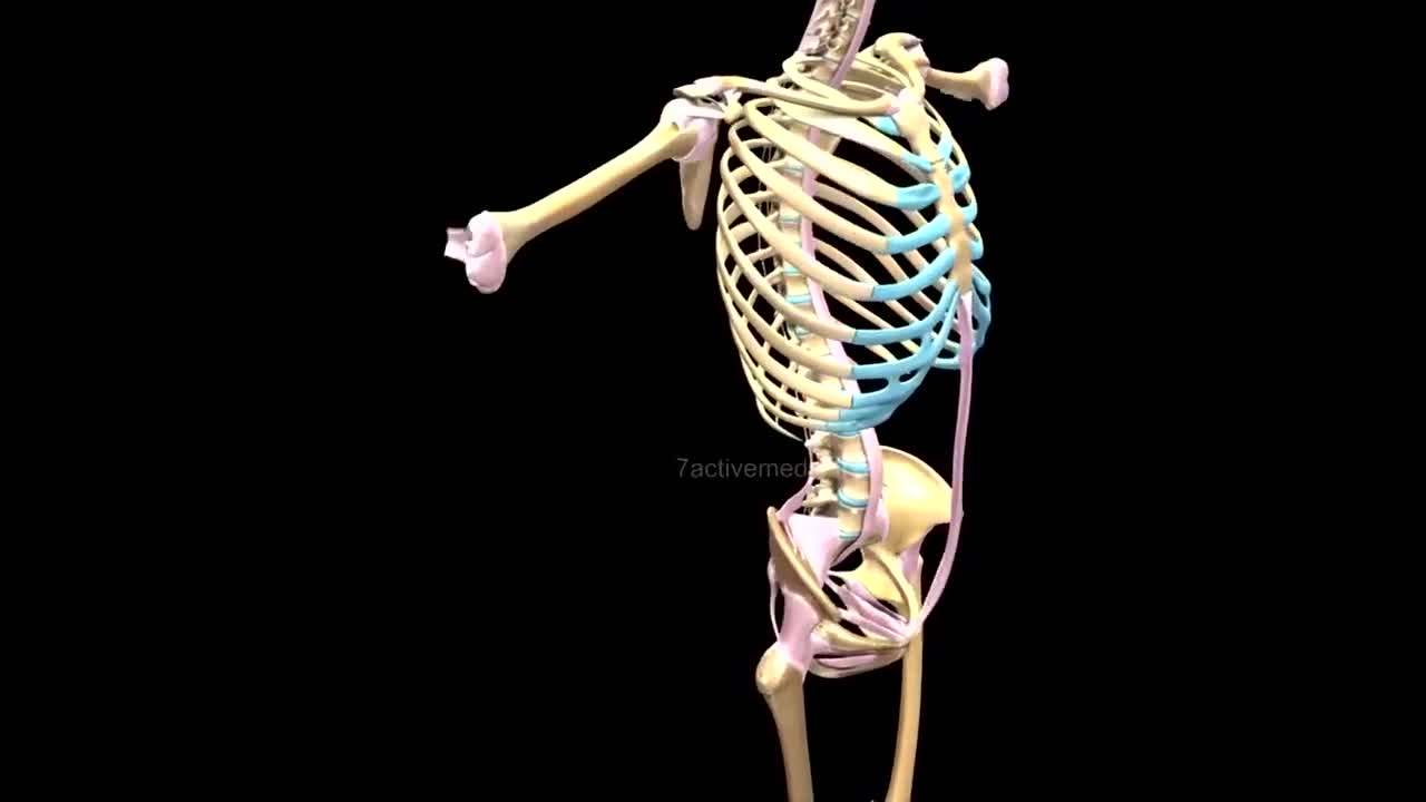 This amazing video image of these bones and skeletons of the human body💪💪