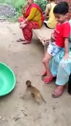One day a family went for a walk in the Sundarbans and when they went there they saw a small monkey army lying sick and they brought the baby and treated him and saved him. Here is a video of the baby walking with his family.