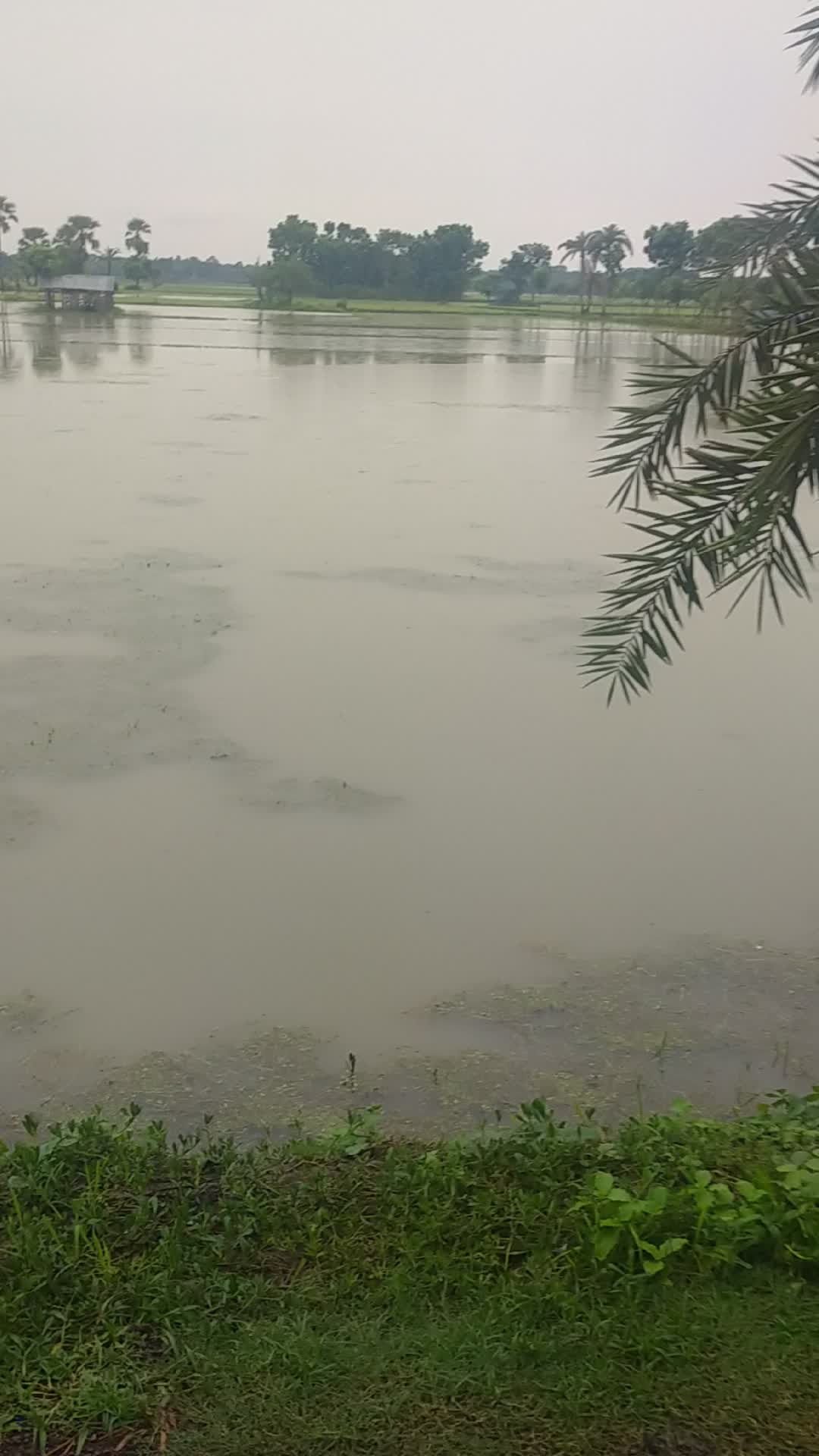 Agricultural land was damaged due to heavy rains.
