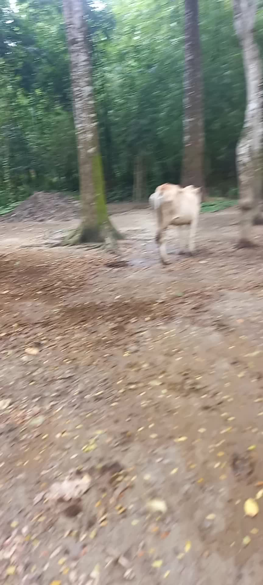 Some cow weather in rural areas.