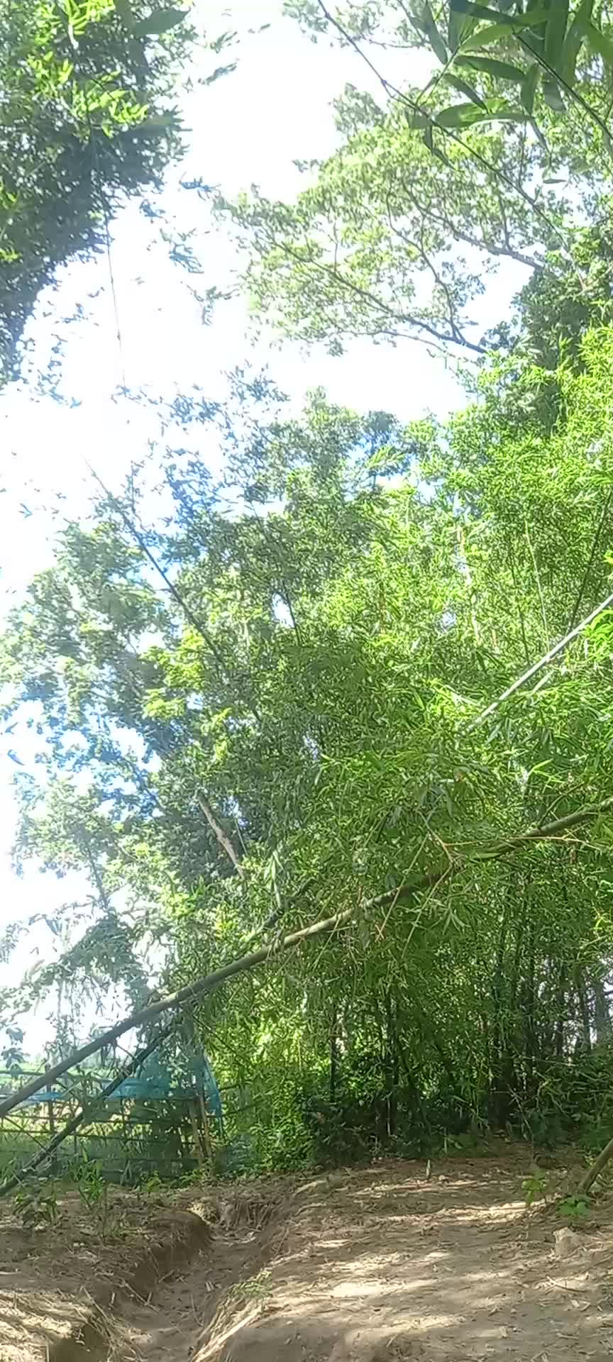 The light in the sky filled with air around the greenery. This environment looks very beautiful. You have seen this video. The wind is going inside a golden garden.