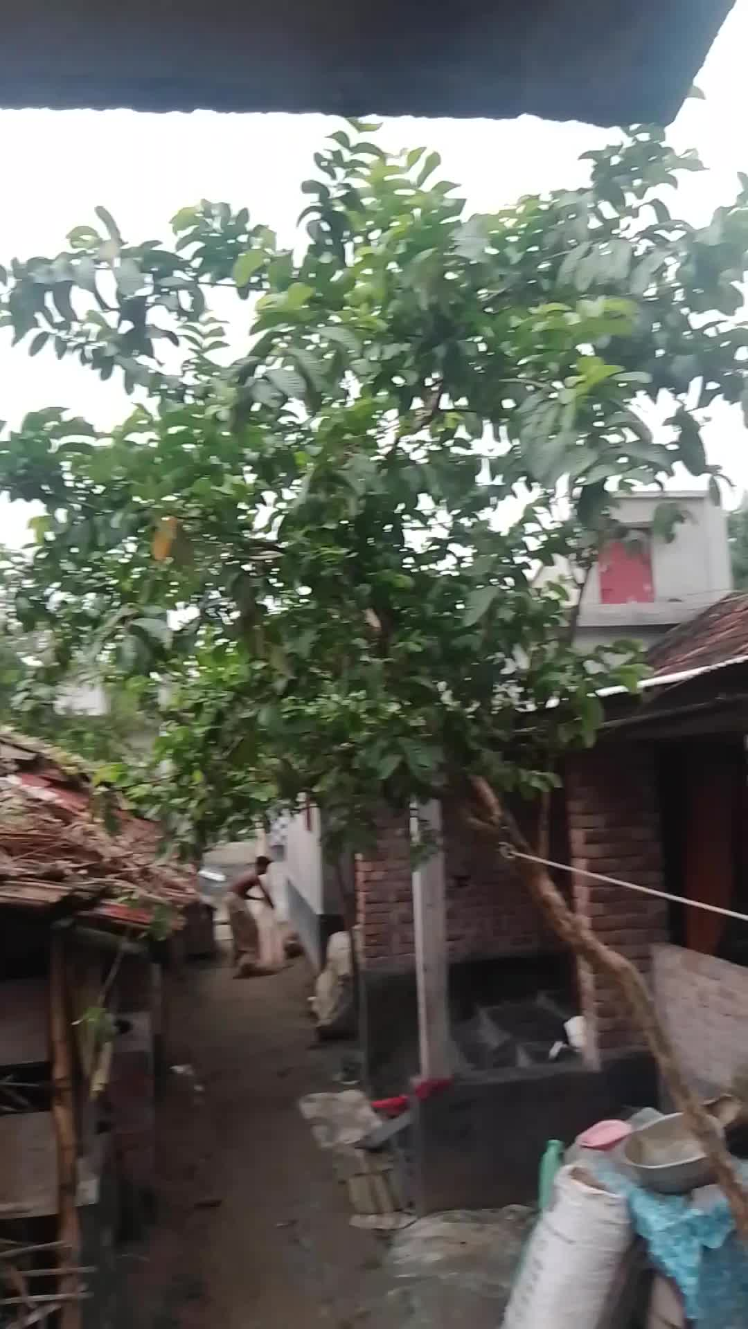 In the video above you can see that there is a lot of wind and the leaves of the plants are moving a lot in this wind.