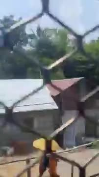 Video of the train.