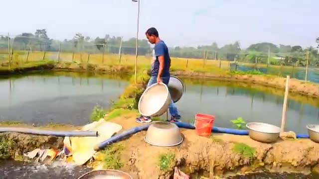 Video of a fish farm