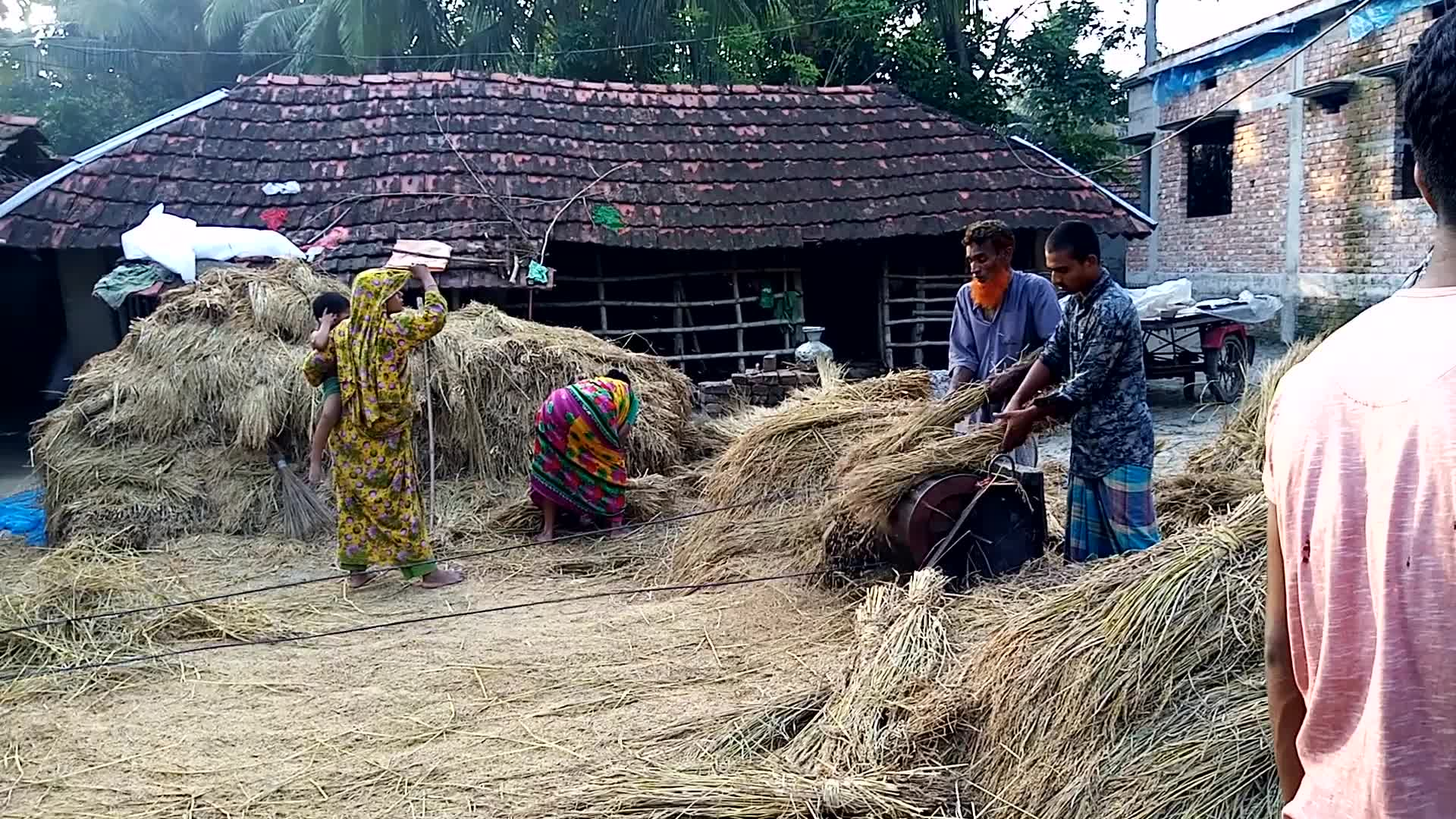 The video of threshing rice looks very beautiful
