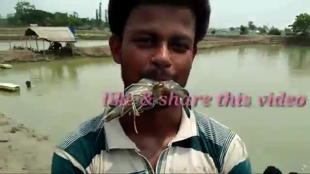 Here is a video on how to cultivate shrimp