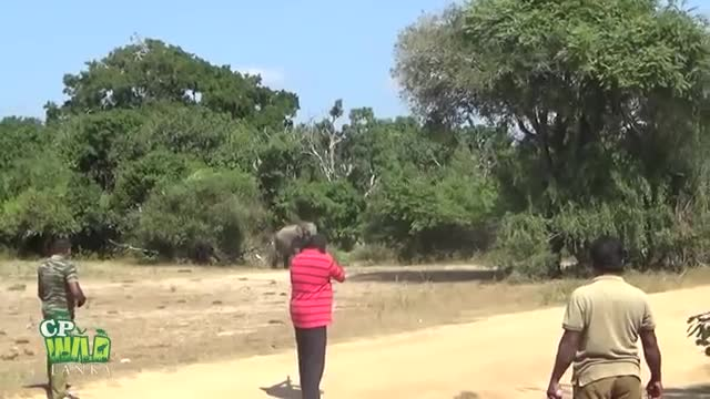 Here is a video of how elephants can be seen in the forest