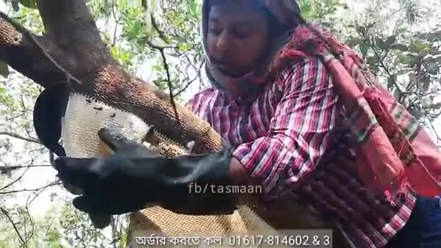 A video of Satkhira collecting honey from the Sundarbans can be seen here