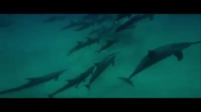Beautiful view of the movement of fish under the water.