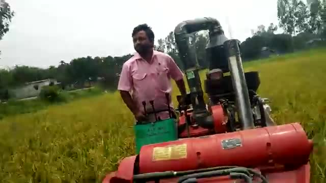 Rice is being cut with a very beautiful rice cutting machine