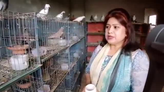 Here is a video on how to keep pigeons