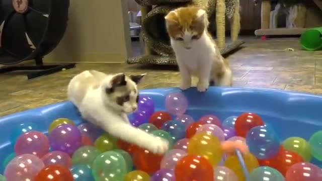 Quite Animal cat. This video cat playing with marbles