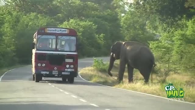 Elephants are moving from the Sundarbans of Bangladesh to the area