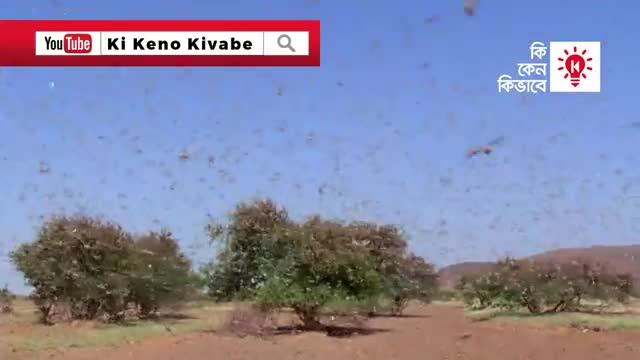 See the persecution of locusts in a province of North Korea