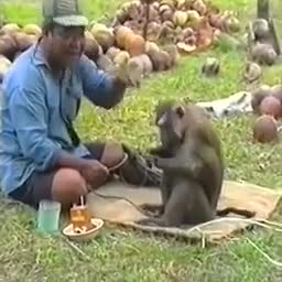 The monkey is very smart.