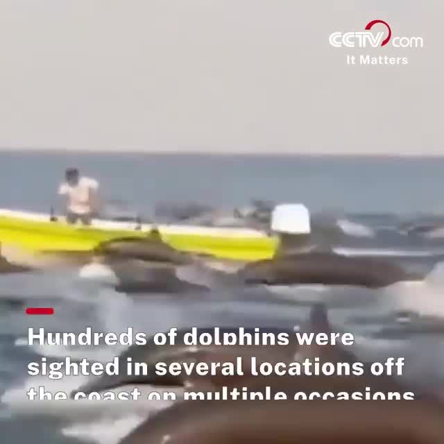 Hundreds of dolphins.