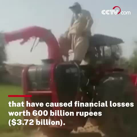 locusts are spreading and destroying human crop lands.