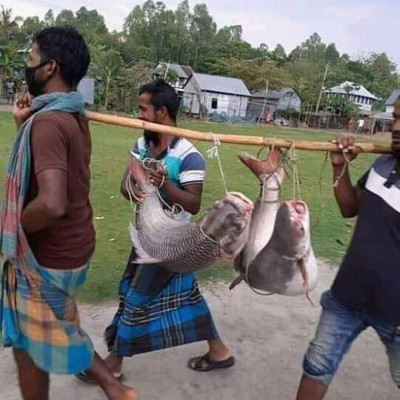 The fun is different when a lot of big fish are dead from somewhere. Here it is seen that three people are carrying fish on their shoulders and these fish are boiled fish and a killer fish.  It is seen that if you put a lot of smile on their face like this, they will smile