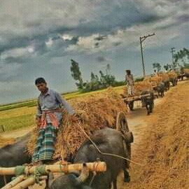 In ancient times, he said, one of the bullock carts, the horse carts, the buffalo carts, these types of carts are still seen by people today.